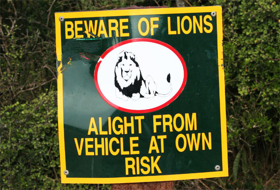 south africa signs danger beware of lions