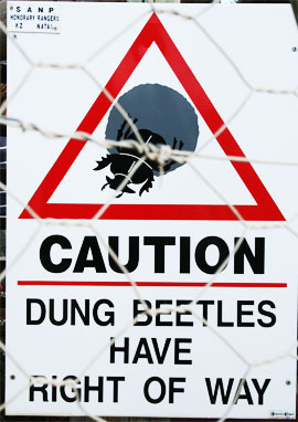 south africa signs dung beetles have right of way