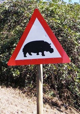 south africa hippo crossing