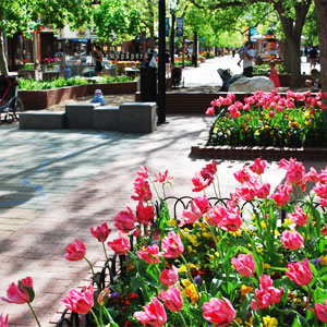 Colorado Festivals Blossom in Springtime