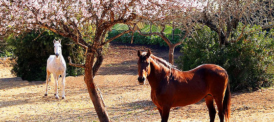 The Algarve horseback riding