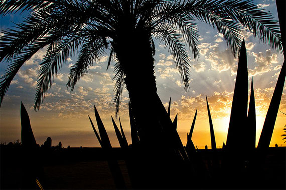 cape verde sunset palm