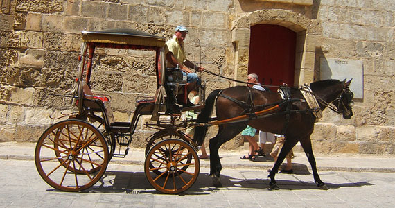 malta horse carriage